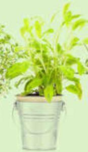 Você sabia que existem plantas que atraem proteção para o lar?